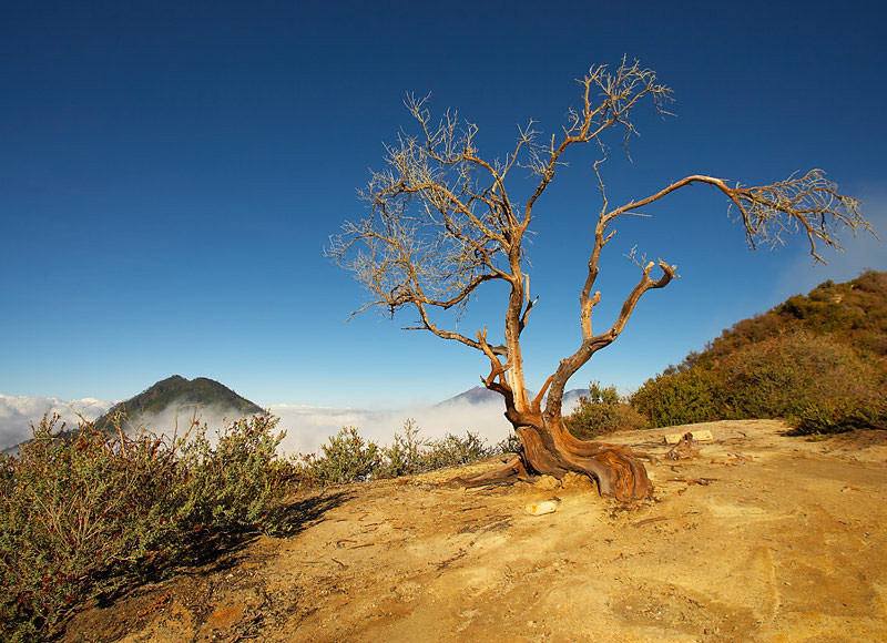 A dead tree at the edge of the crater.  It would have died as the activity of the volcano increased.