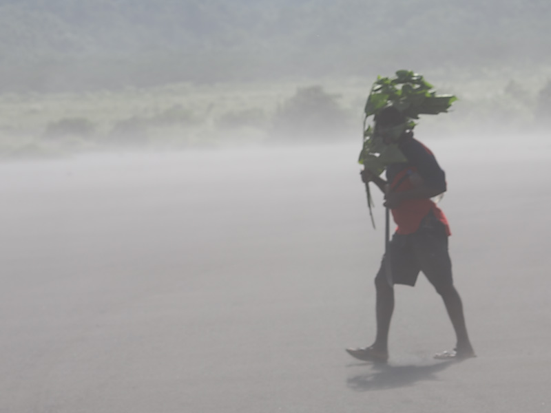 Walking the ash plain
